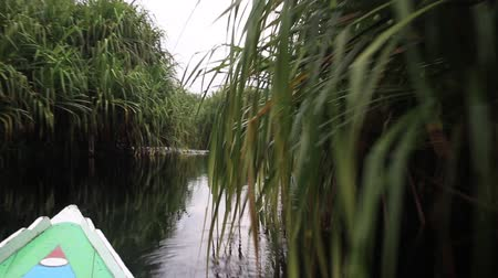 kenu : Kalimantan, Borneo, Indonesia, february 2016: Sailing in a motor boat in the jungle canals.