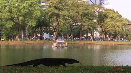 Monitor lizard near the lake in Lumpini Park.