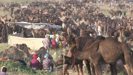 kudde : Pushkar, Rajasthan India, november 2011: Overzicht van de Camel Fair.