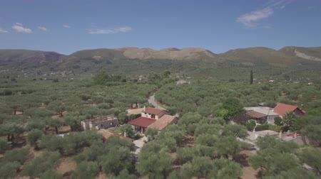 zeytinyağı : 4K ungraded Aerial view of olive tree field in Zakynthos Zante island, Greece - Log Stok Video