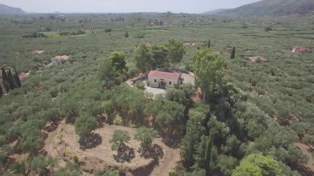 zante : 4K ungraded Aerial view of olive tree field in Zakynthos Zante island, Greece - Log Stock Footage
