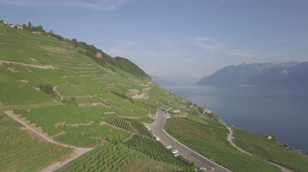 лоза : 4K Aerial footage of vineyards in Lavaux Terraces near Lausanne in Switzerland - UHD Стоковые видеозаписи
