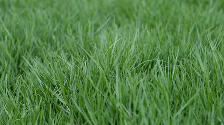 přední : Green grass in the garden and look fresher.