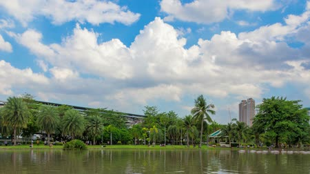 ormanda yaşayan : Park in central Bangkok. Chatuchak Park is a popular place on weekends.Time lapse video Stok Video