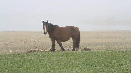 vadon : horses in fog one Stock mozgókép