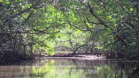 mangue : Through the mangrove forest