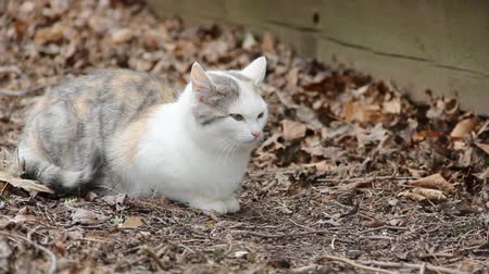 Feral cat sitting in dried leaves.
