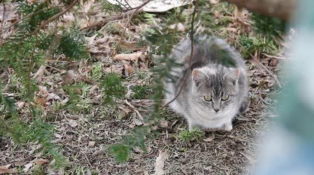 Feral cat sitting in dried leaves under a tree.