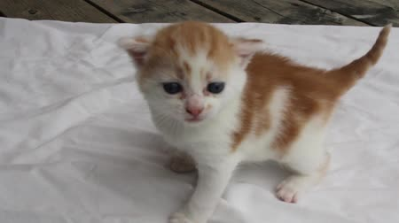 Baby kitten (about 6 weeks old), crying.