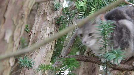 Feral kitty in tree looking at camera, then looking away. Wideo