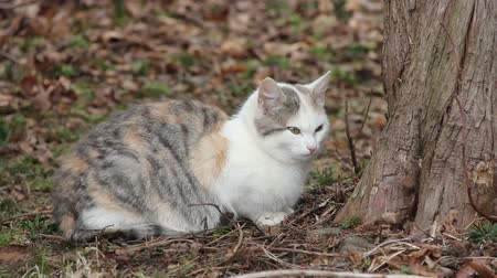 Feral cat, between 6-8 months old, sitting by tree Wideo