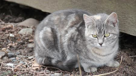 Feral cat, between 6-8 months old, sitting by shed.