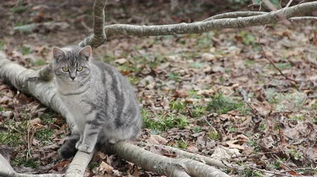 Feral grey tabby, about 6-8 months old, sitting on fallen tree.
