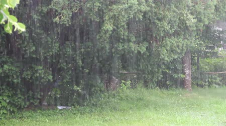 Down pour of rain in backyard.