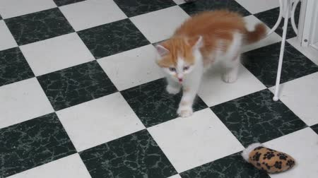 kotki : Orange and white Kitten panting while playing with siblings.  Please note, the kitten is fine. The Vet saw her shortly after. Wideo
