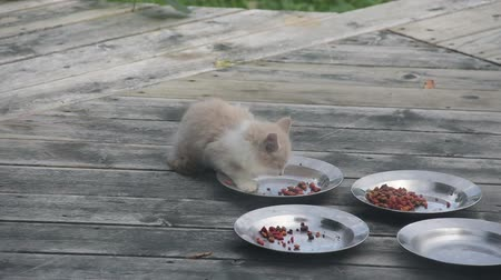 Feral Kitten, about 12 weeks old, eats dry food.