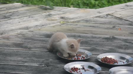 kotki : Feral Kitten, about 12 weeks old, eats dry food.