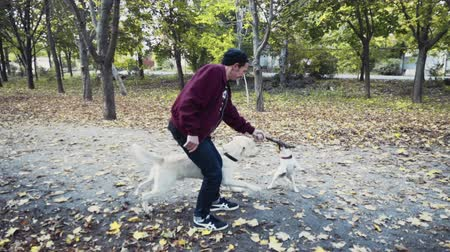 терьер : young man playing with two dogs in autumn park