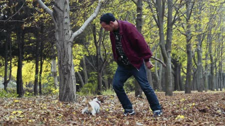 düşmeler : young man playing with two dogs in autumn park