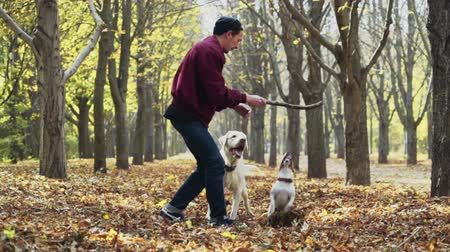 bengala : young man playing with two dogs in autumn park