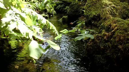 kamień : A little stream in the forest with sound