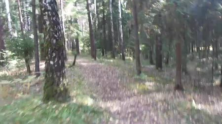 adrenalin : Riding through the forest