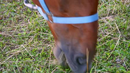 A horse grazing near the lake Stock Footage