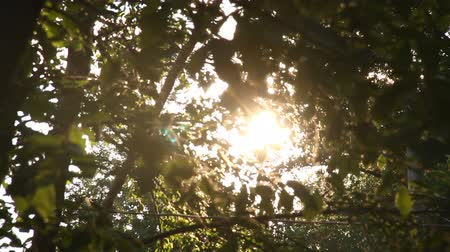 The sunlight streaming through the leaves Stock Footage
