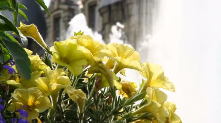 The flowers on the background of the fountain and the ancient castle Stock Footage