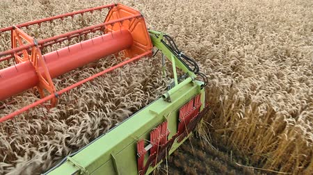 The harvesting of ripe wheat combine harvester