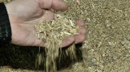 Crushed sawdust in the hand Stock Footage