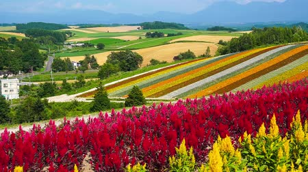 japán : The flower garden of biei town Hill