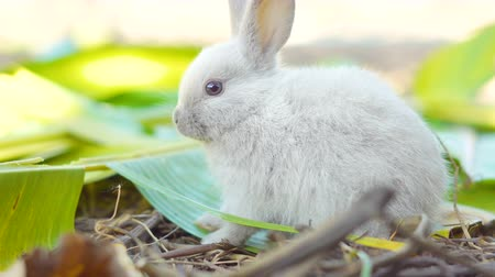 rabbit ears : rabbit eating leaves in the garden