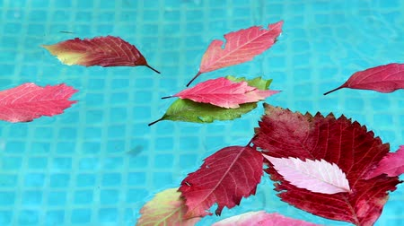 concept : Autumn leaves floating in blue water pool