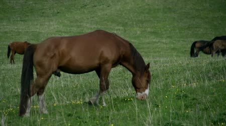 otlama : A horse grazes near herd on spring pasture
