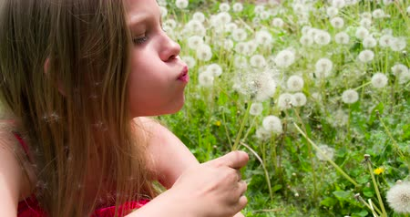 desejando : Girl with long blond hair blows fluffy dandelion seeds. Slow Motion 120 fps