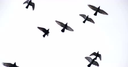 birds flying : Flock of birds flying over the camera on a background of the cloudy sky Stock Footage