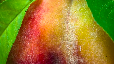 celý : Peach closeup rotates in front of the lens. Its velvety surface is covered with small drops of water