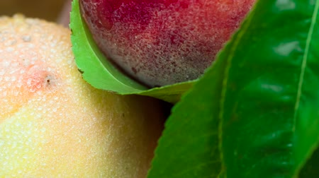 нектарин : Ripe peaches with green leaves close-up rotate in front of the camera Стоковые видеозаписи