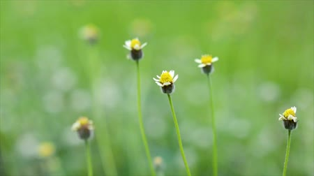 Yellow grass flowers in a green lawn