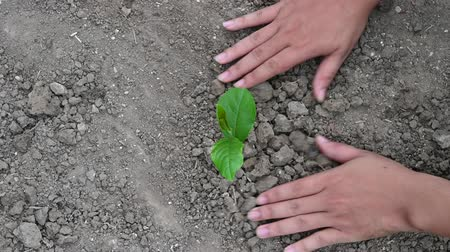 People are planting trees from the top view video 4 K Stock mozgókép