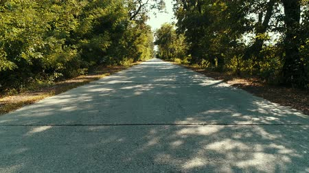 milharal : A POV shot of a car going down a rural road lined with trees