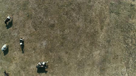 farm in brazil : Top View of Cows on a Farm in Rural Area in Sao Paulo, Brazil
