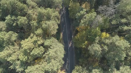 кондиционер : Aerial view flying over old patched two lane forest road with car moving green trees of dense woods growing both sides. Car driving along the forest road. AERIAL: Car driving through pine forest