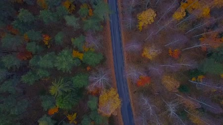 magasság : Aerial view of thick forest in autumn with road cutting through
