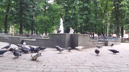 migalha : Little child scares pigeons in the park in spring.