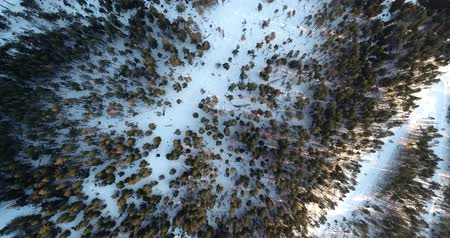 snowcapped : Coniferous winter forest view from above, Dense coniferous forest top, view aerial a winter pine forest of pines and firs, Aerial View of Pine trees in snow, Flight over winter mountain forest