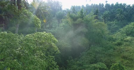 mlhavý : Aerial view of foggy rainforest. Flight over of jungle