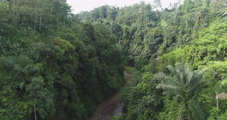 amazonka : Aerial view of rainforest river, canyon. Flight over of jungle
