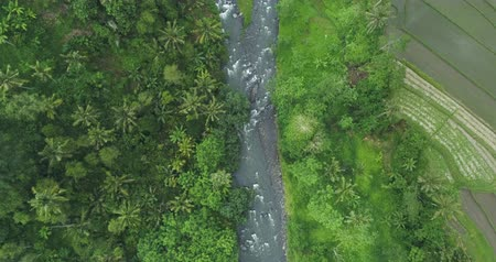 rzeka : Flying over of rainforest river and rice terrace. Aerial view of jungle in Bali.